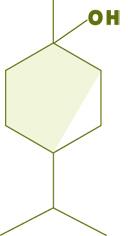 Molécule_Thujanol